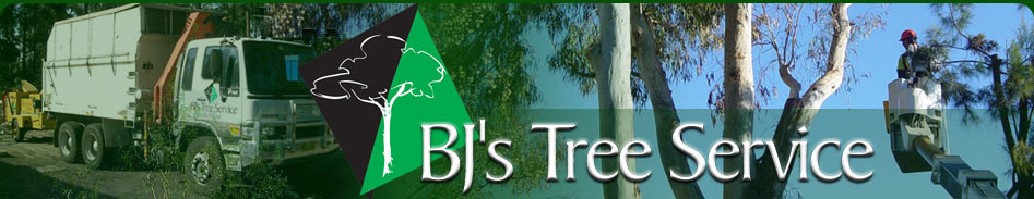 BJ's Tree Services